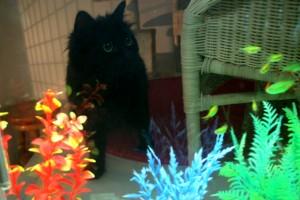 La Minouterie – superbe pension pour chats avec aquarium