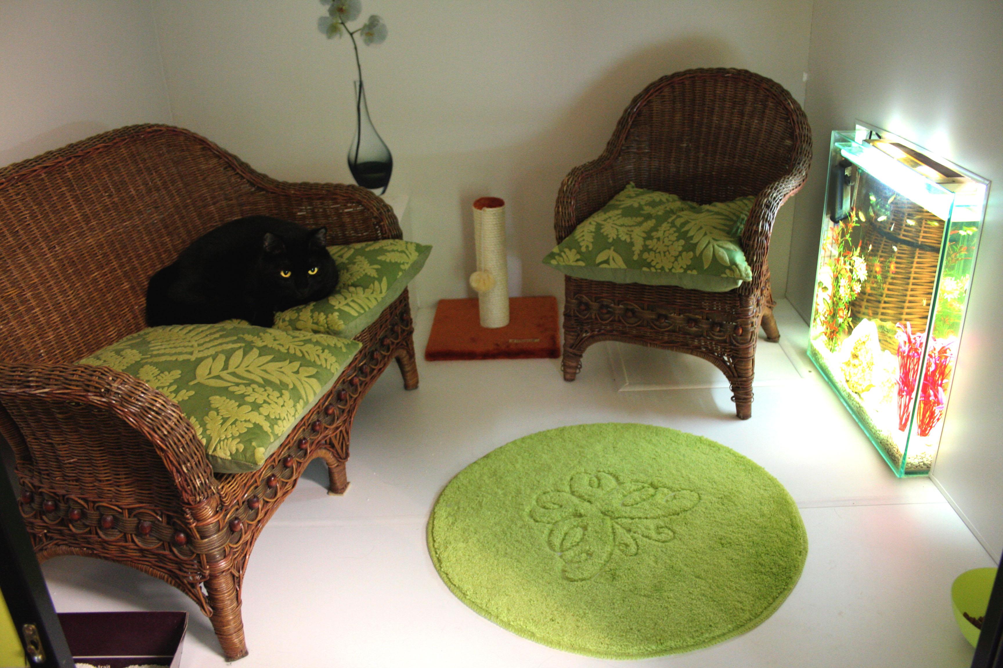 La minouterie. Pension pour chats en Ile de France, aux portes de Paris. Pension pour chats à Paris. Garde de chats à Paris.